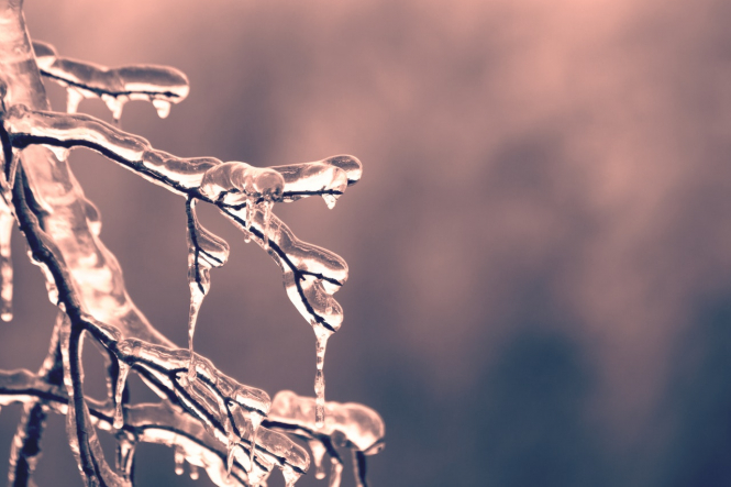 An icy branch in sunshine. Heavy rain and low temperatures predicted for the days ahead