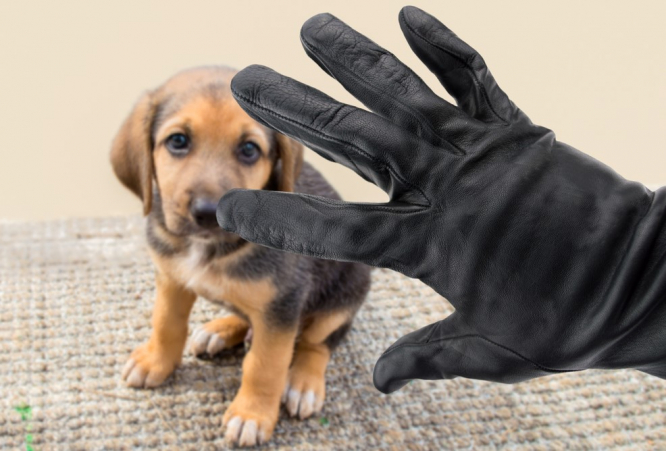 A hand in a black glove over a puppy. Dog thefts more brazen in France as prices rise for rare breeds