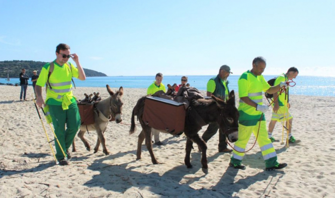 Donkeys walk with paniers to pick up rubbish on the beach with their handlers in high-viz jackets. Donkeys trialled as beach-cleaners at Pampelonne beach in Saint-Tropez