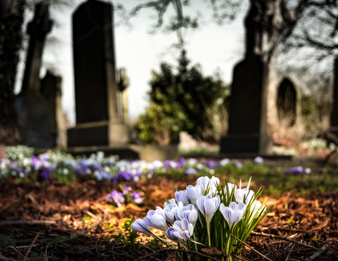 Flowers growing in a graveyard. France lockdown: Can I visit a cemetery in another village?