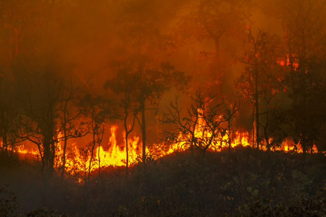 An image of a forest fire
