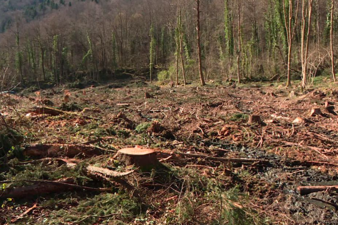 A section of the forest where trees have been chopped down. Hundreds of trees stolen from private woods in south France