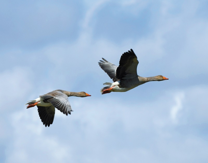 Ideal Time To Watch Migrating Birds In France