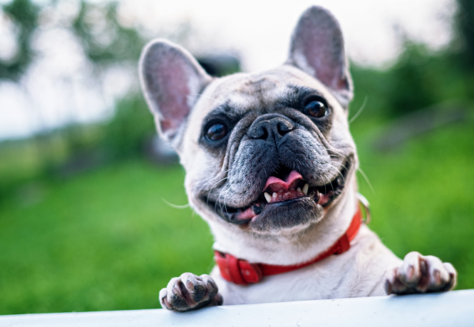 A happy-looking dog. This week marks the start of the first National Pet Identification Week in France.