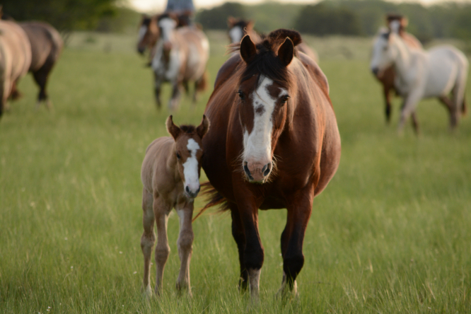Horses in a field. New enquiry opens into horse mutilations in France