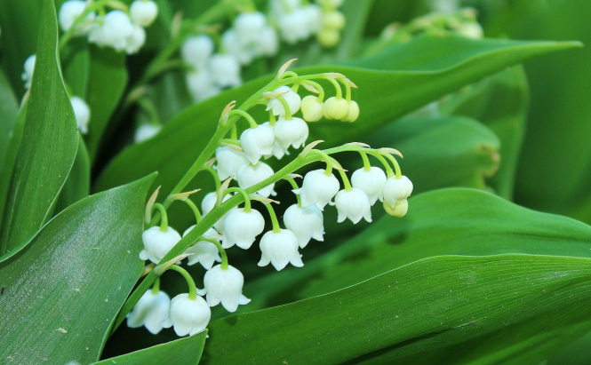 Boost Care Homes With Lily Of Valley Gift