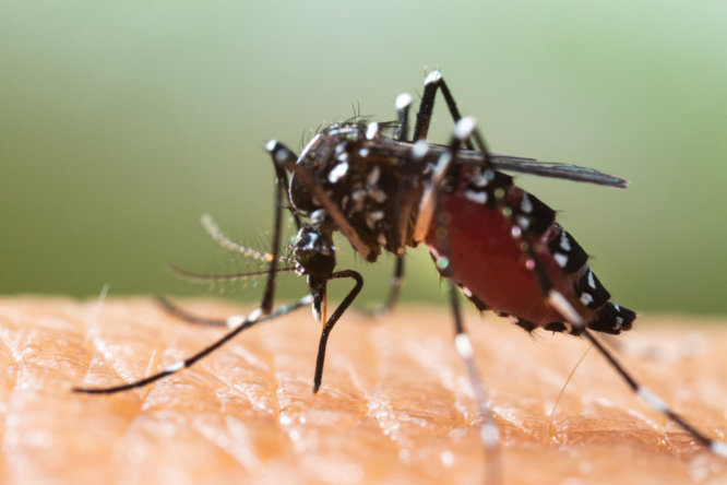 tips for keeping mosquitoes in france away from an entomologist