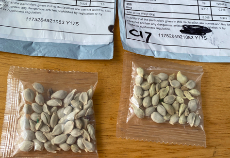 Two packets of mystery seeds sent from China. Individuals in France have received seed packages from China that they did not order.