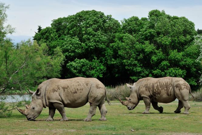 Animals in Sigean Safari Park, France.