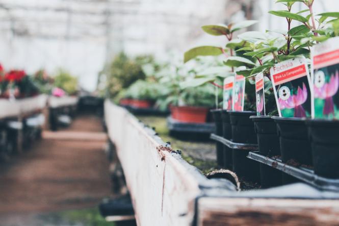 Plants in a garden centre. France lockdown: Can I go to a home/garden shop 50km away?