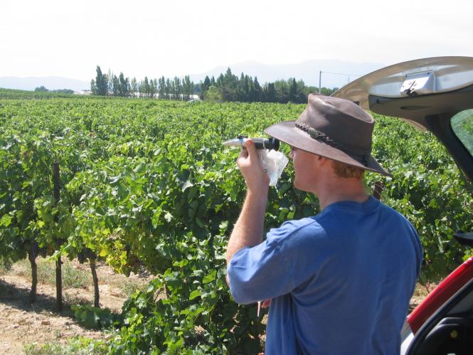 Winemaker testing grape juice using a refractometer