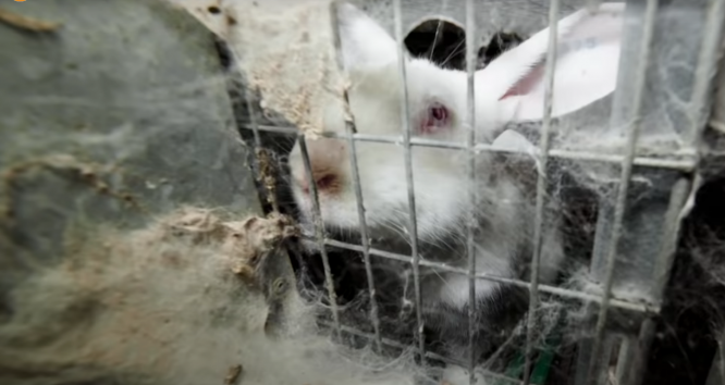 A screenshot from a video published by animal rights group L214 shows poor conditions that rabbits in France are kept in for breeding purposes