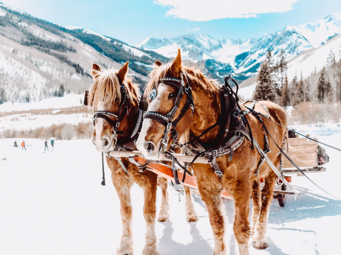 Horses pull a carriage in the mountains. French Ski station replaces closed ski lifts with horses