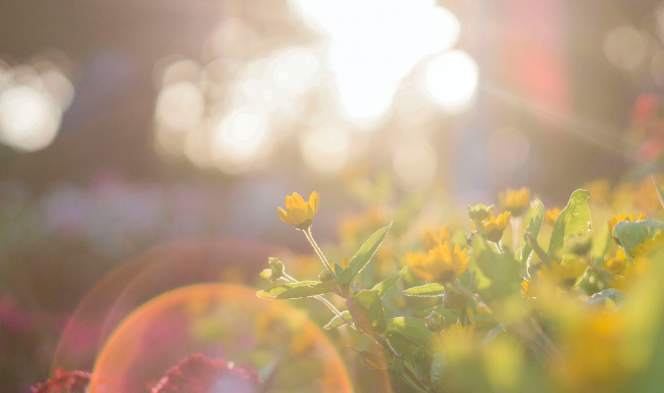 Sunshine through flowers and grass. Leading French experts advise vitamin D to counter Covid-19
