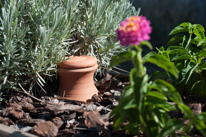 Pictured; The Oyas Watering System plant pot in a garden, which reduces watering by up to 70%. Photo: Oyas Environnement.