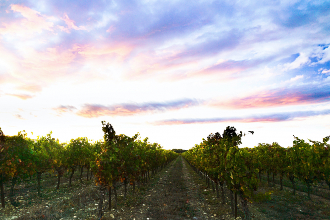 South of France vineyard trek is most popular hiking route for 2021