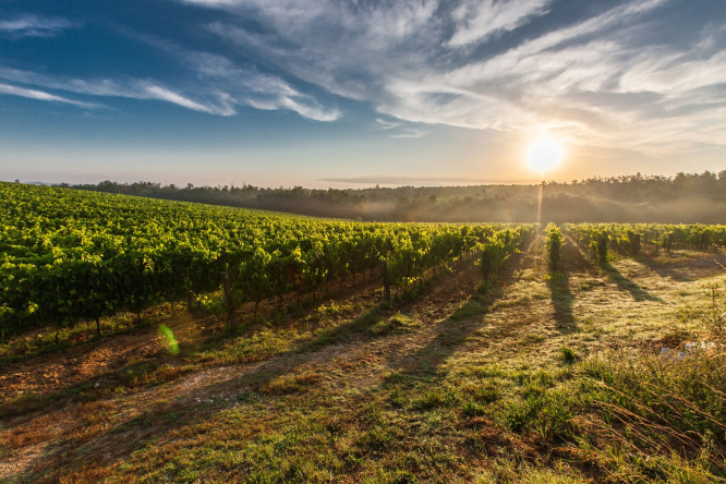 Vineyards and the sun on the horizon. Rural mayors raise alarm over French medical deserts