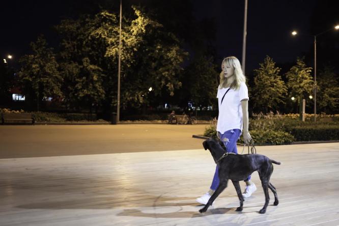 Walking a dog at night