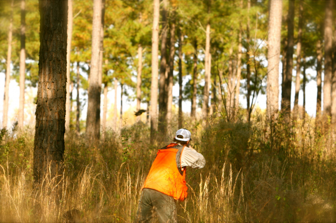 a hunter in a hi-vis jacket points gun into a patch of long grass