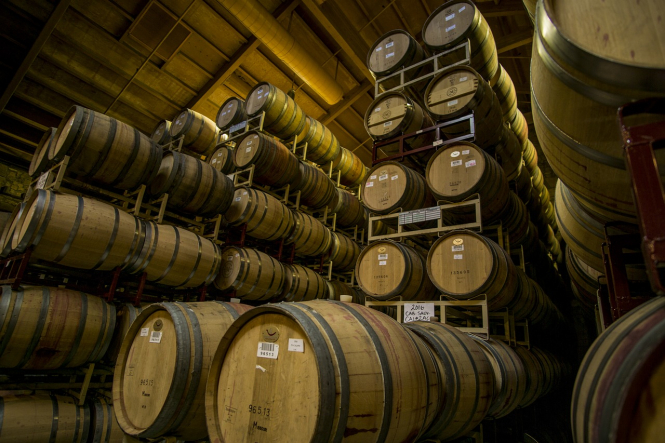 Black grapes thriving in a vineyard despite coronavirus strains on wine tourism.