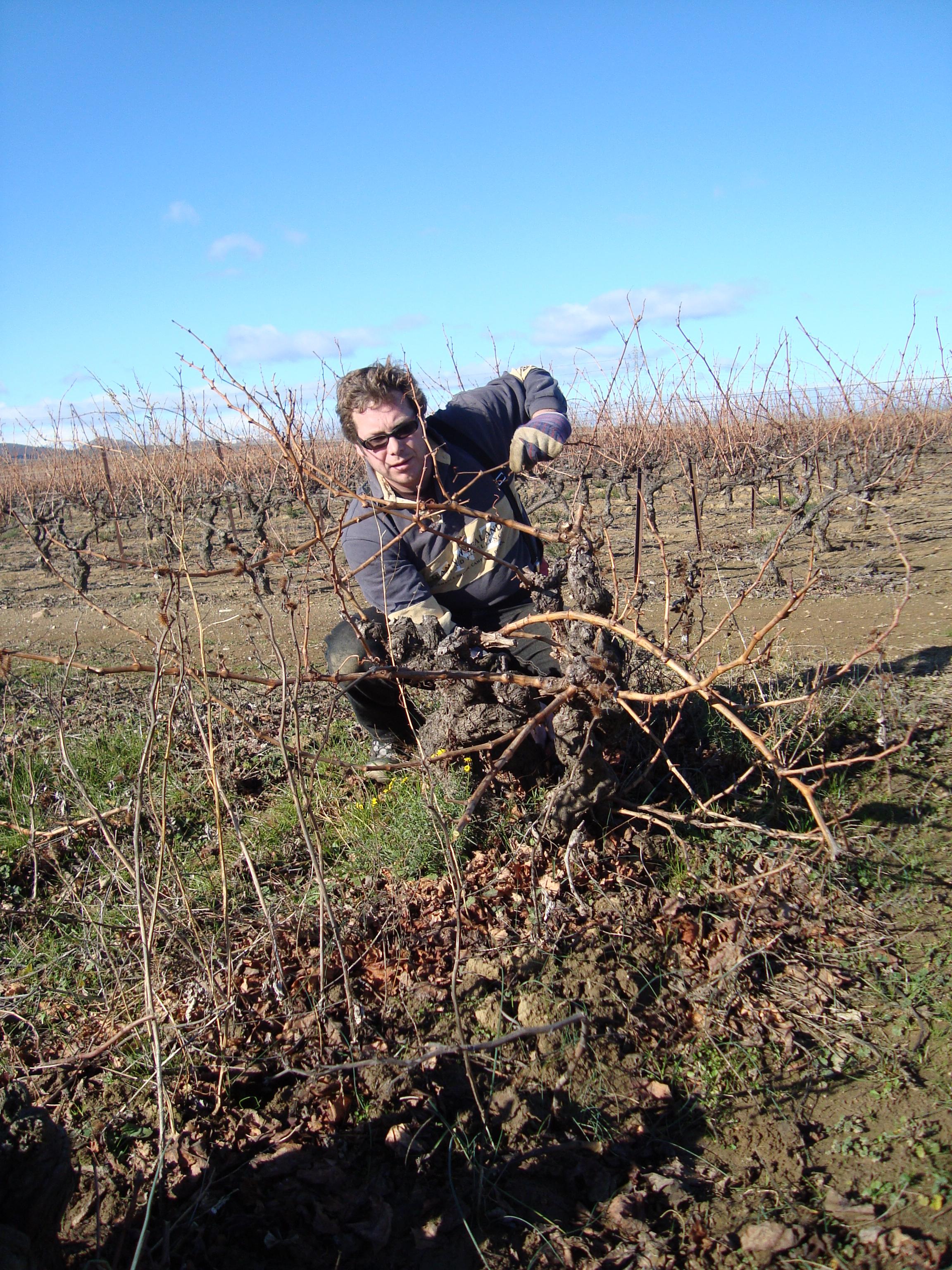 Pruning Vines Is Essential Task