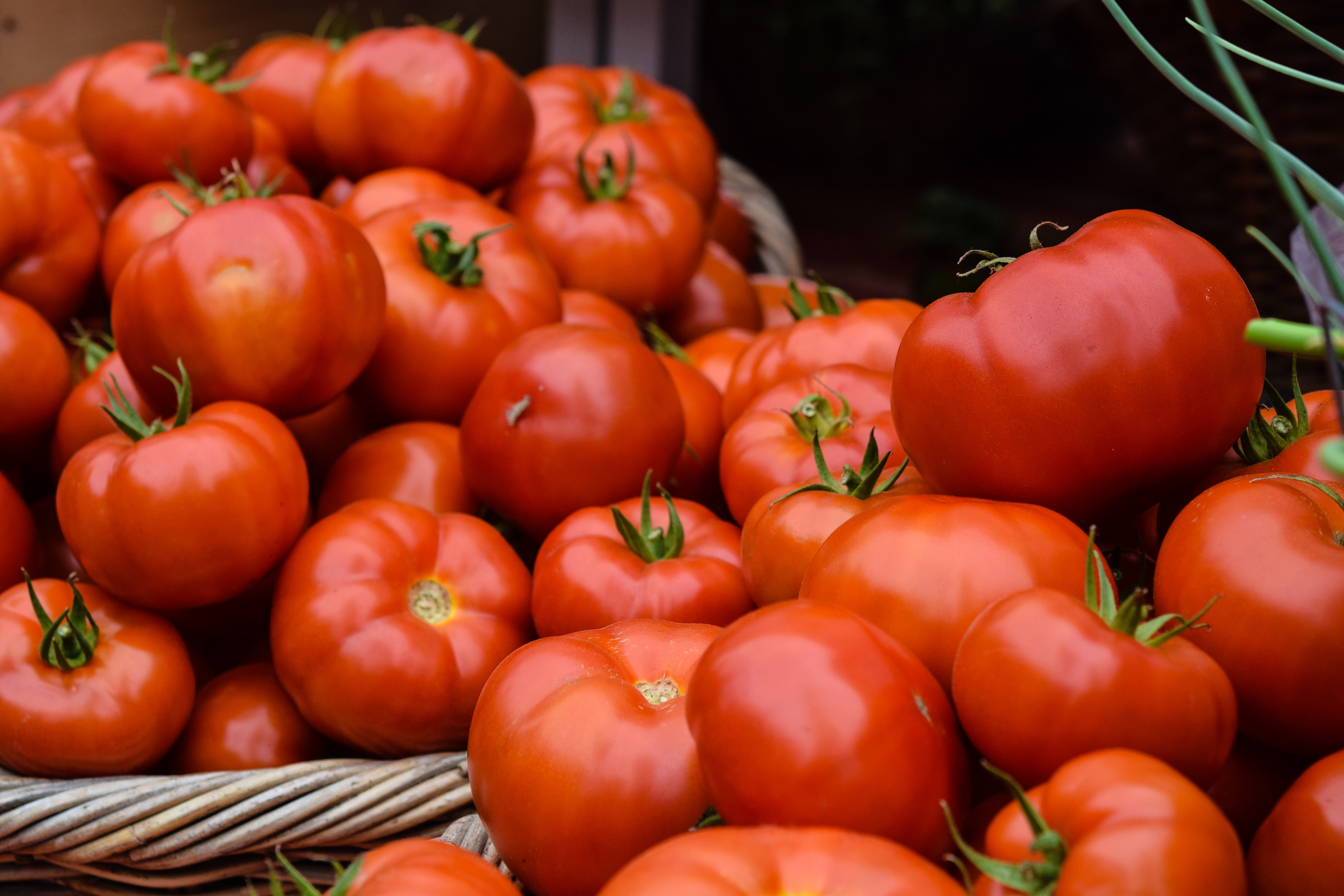Incurable tomato virus found in France for first time