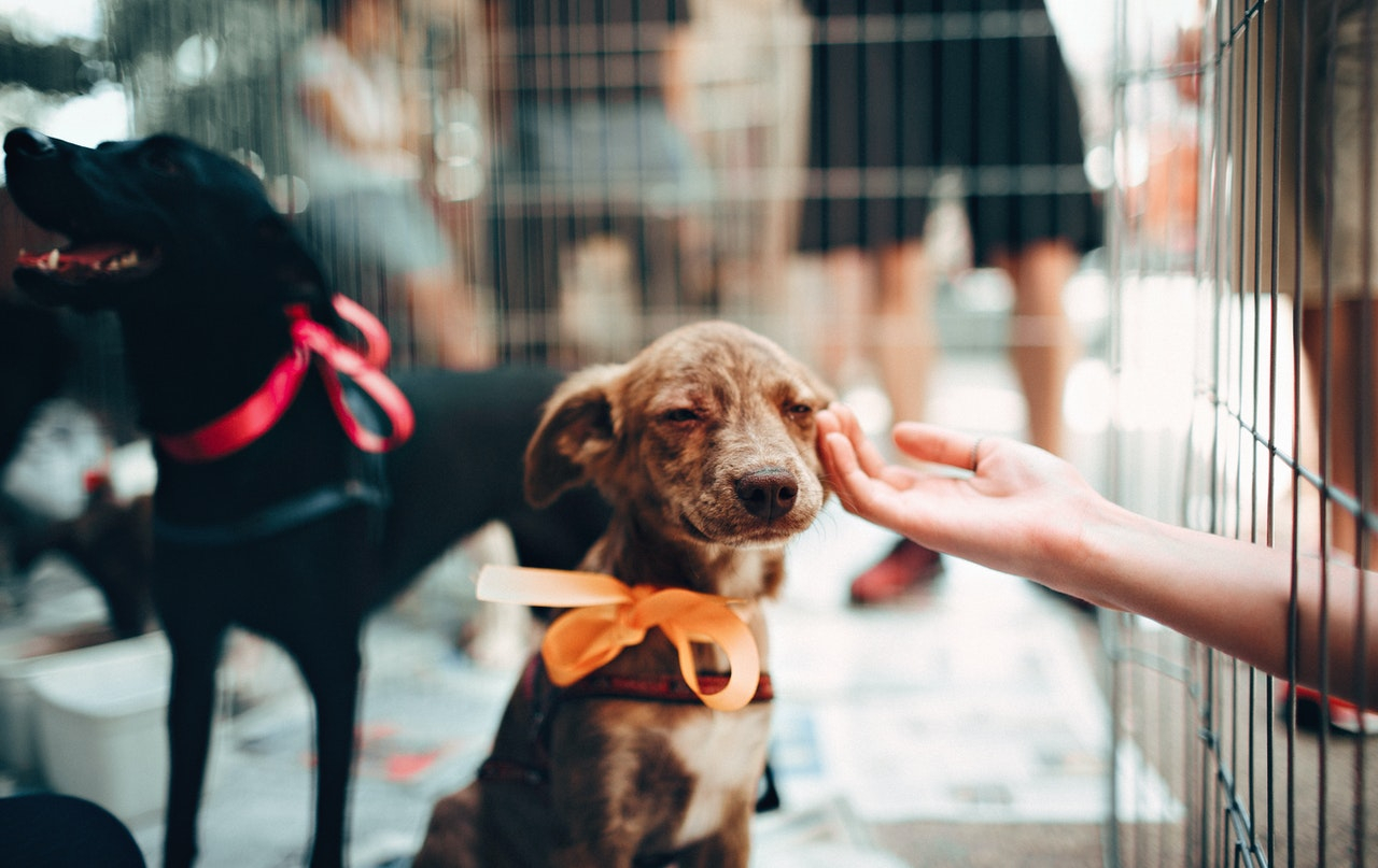 End Animal Cruelty And Abandonment In France Says Mp Report
