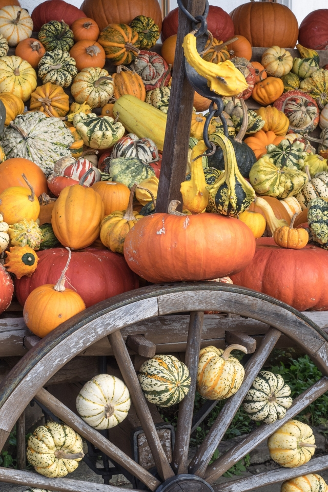 Pumpkins, squash and gourds come in many shapes, sizes and colours