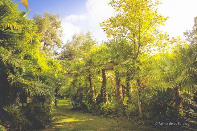 Autumn at Palmeraie du Sarthou