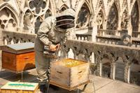 Notre-Dame fire: Bees on roof survived, beekeeper says