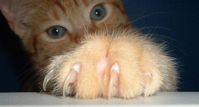 Light orange cat with large paw and claws in foreground