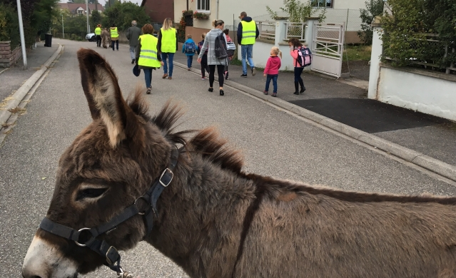 Donkey in foreground with children walking along street and adults in yellow jackets
