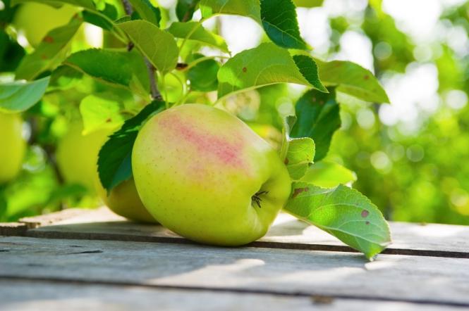 Pomme du Limousin