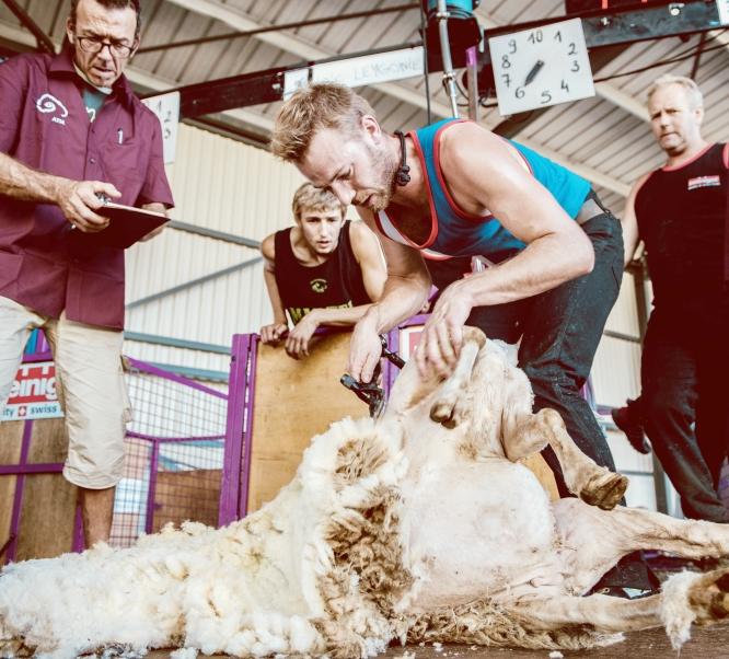 Loic Leygonie French Sheep Shearer Champion