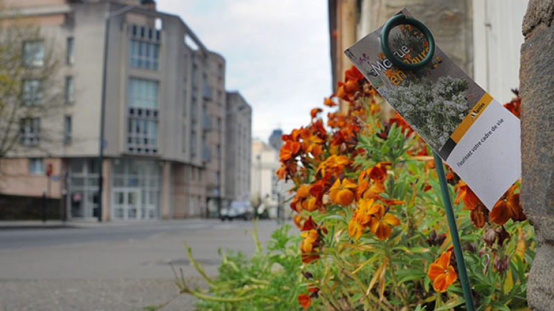 Bright orange flowers and a descriptive note on an otherwise grey street