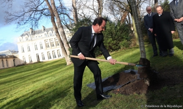 President Hollande uses a long-handled spade to plant a tree in the Elysée gardens in Paris