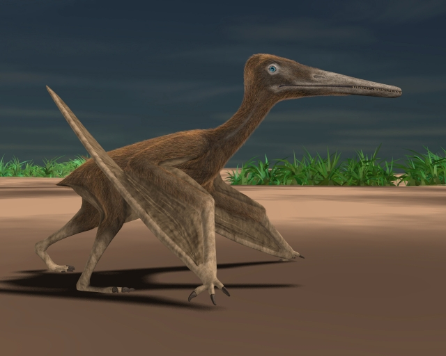 What a Pterosaur looks like