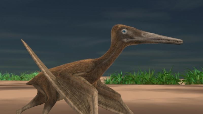 What a Pterosaur looks like
