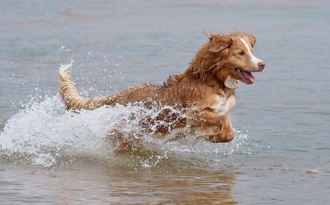 ძაღლი და ცურვა ზაფხულში