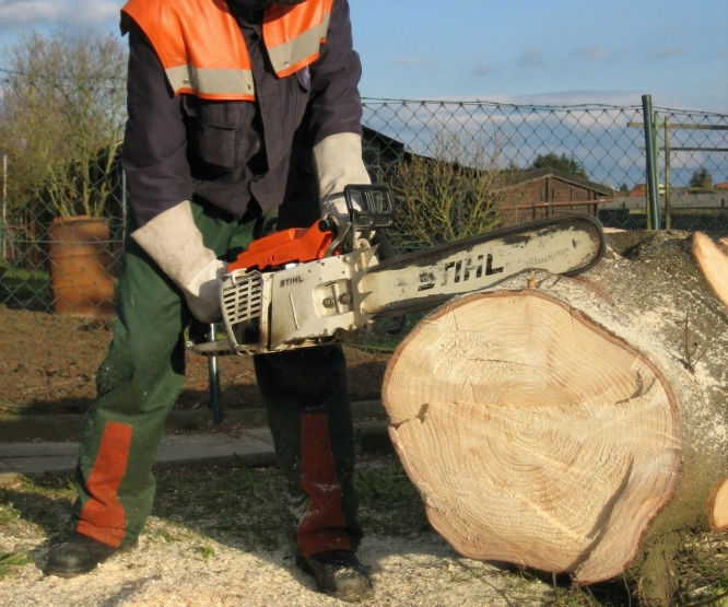 Using chainsaw to chop up large tree trunk