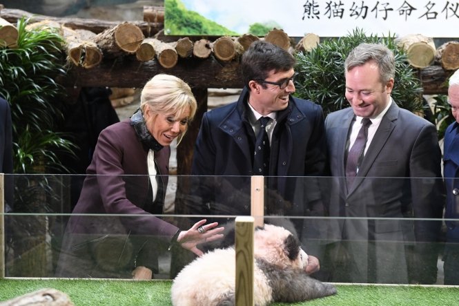 Baby panda growls at Brigitte Macron at naming ceremony