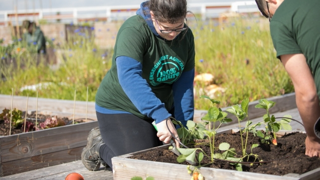 Stdents plant vegetables in planting beds on roof of Carrefour